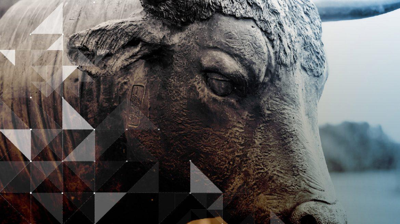 , Decoding the Bitcoin Bull Run